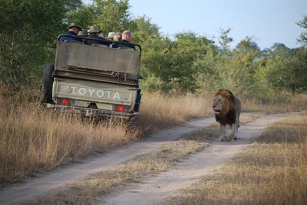 Cropper_safari-935927_640