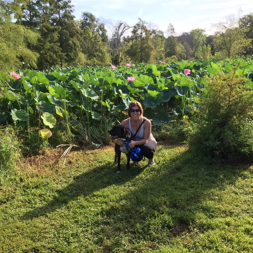 Largesquare_jackie_and_hank_aquatic_gardens